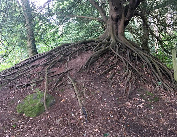 Tree roots example